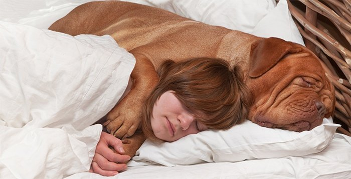 Girl sleeping soundly with her big dog in bed.