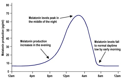 graph showing the flow of melatonin circadian rhythm