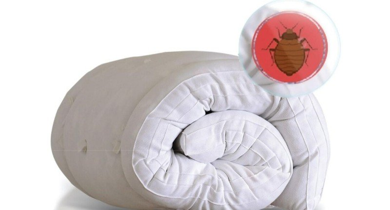 Dust mites in mattresses