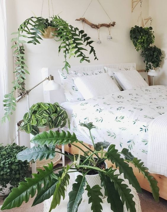 A white bedroom featuring leafy plants and driftwood