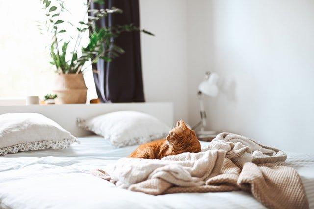 How to cat proof an air mattress?