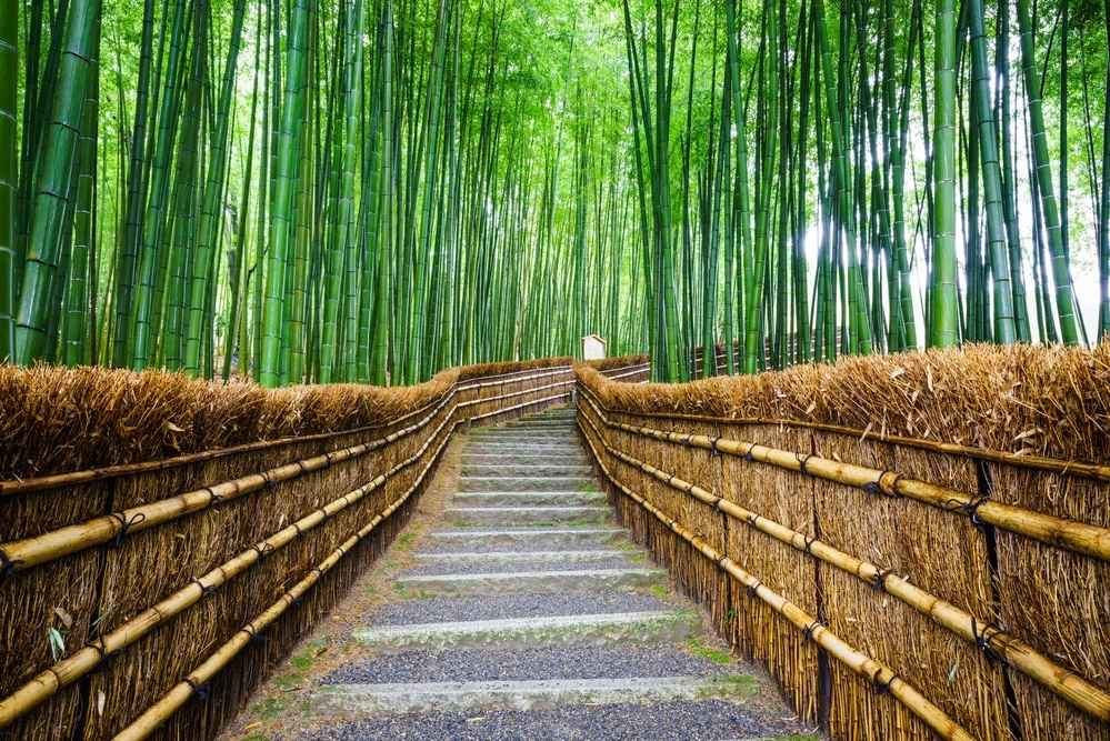 Bamboo forest - where bamboo bedding comes from