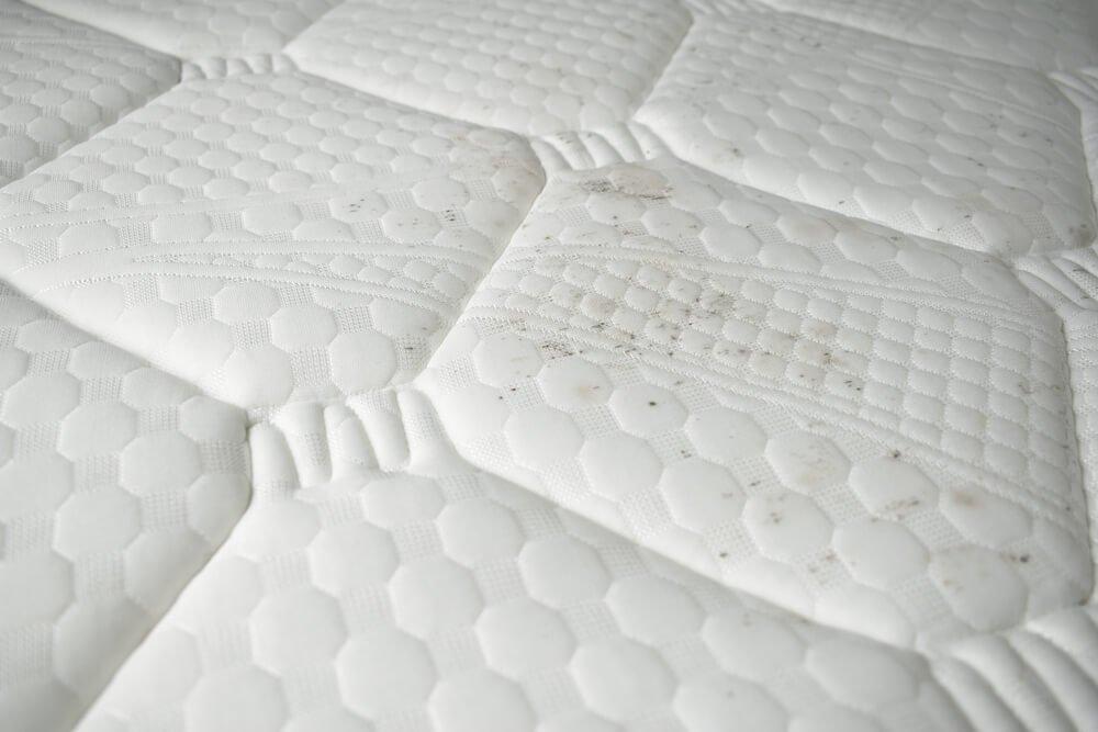 Black mold on a mattress
